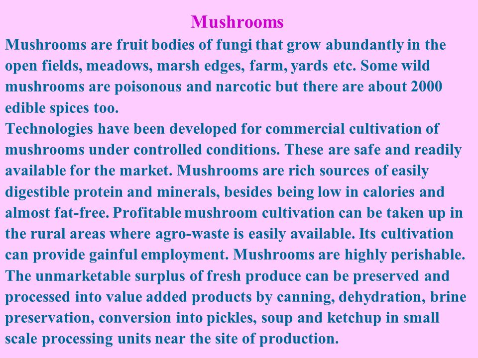 Mushrooms Mushrooms are fruit bodies of fungi that grow abundantly in the open fields, meadows, marsh edges, farm, yards etc.