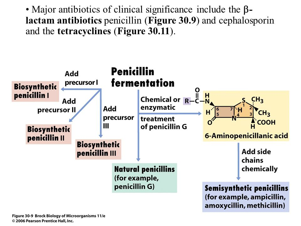 Major antibiotics of clinical significance include the -lactam antibiotics penicillin (Figure 30.9) and cephalosporin and the tetracyclines (Figure 30.11).