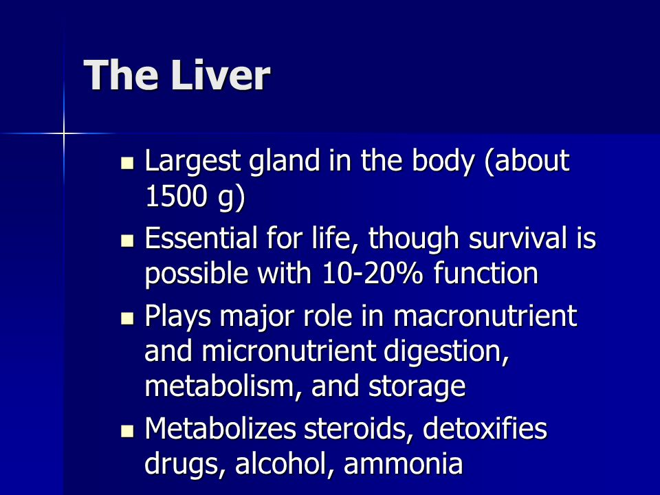 The Liver Largest gland in the body (about 1500 g)