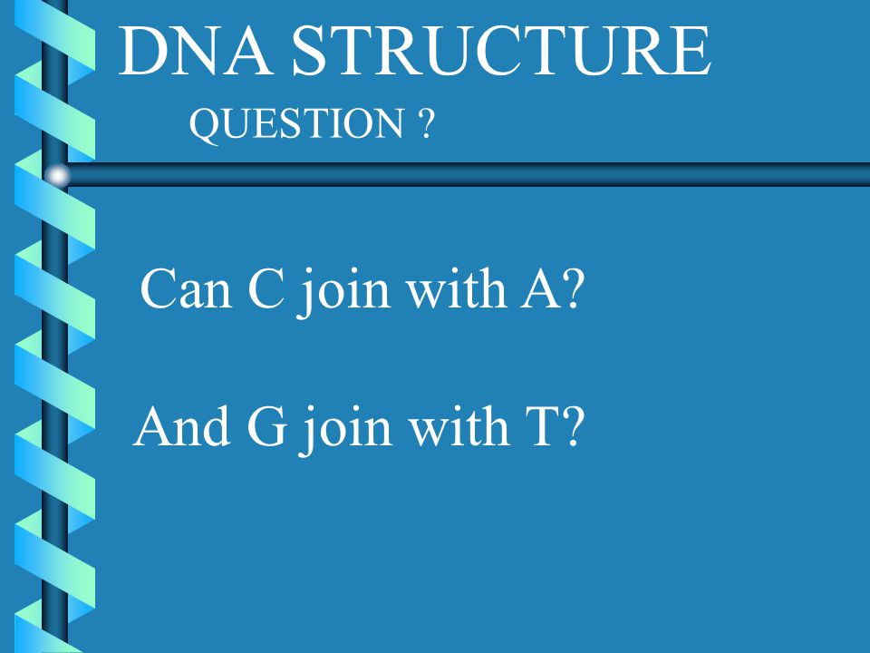 DNA STRUCTURE QUESTION Can C join with A And G join with T