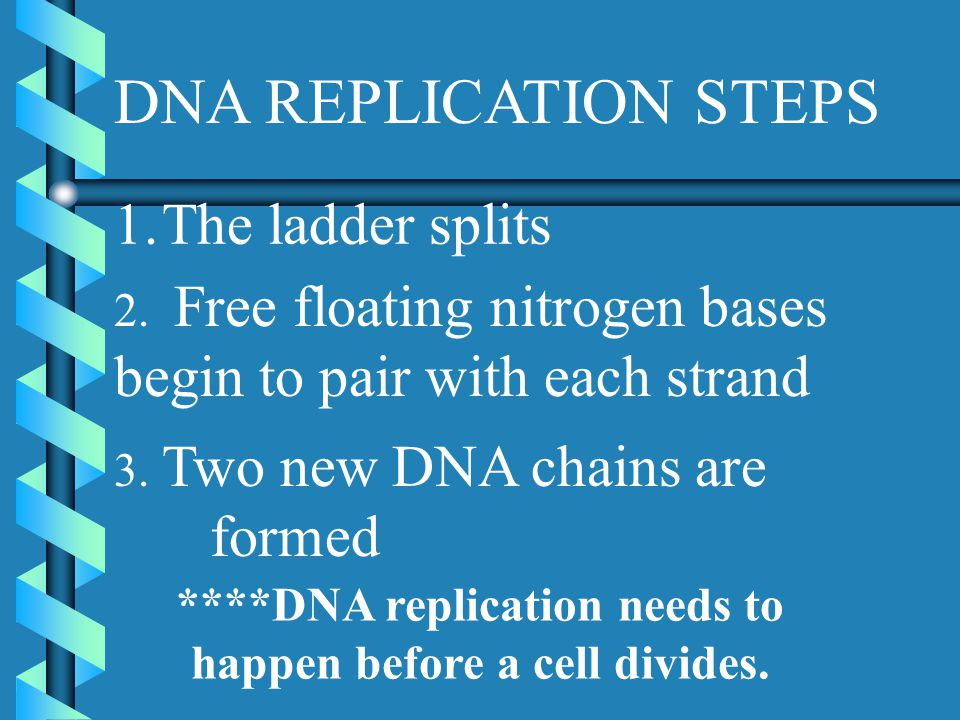 ****DNA replication needs to happen before a cell divides.