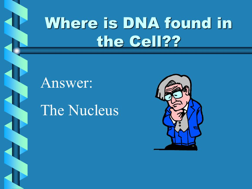 Where is DNA found in the Cell