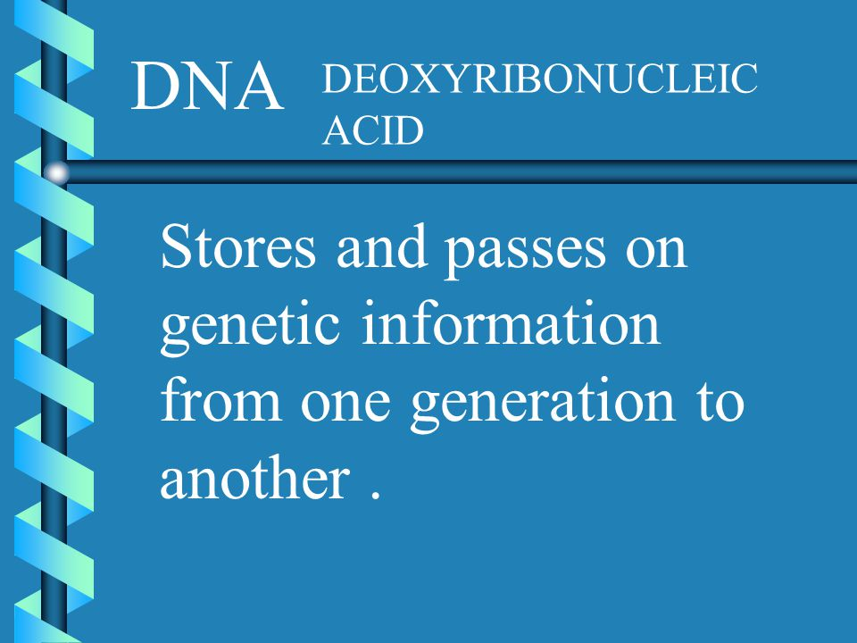 DNA DEOXYRIBONUCLEIC ACID Stores and passes on genetic information from one generation to another .