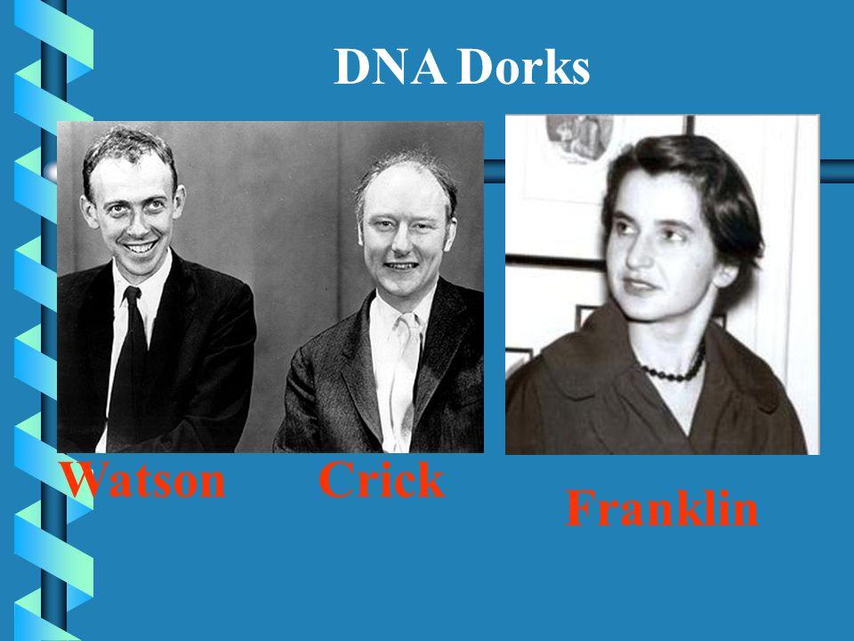 DNA Dorks Watson Crick Franklin