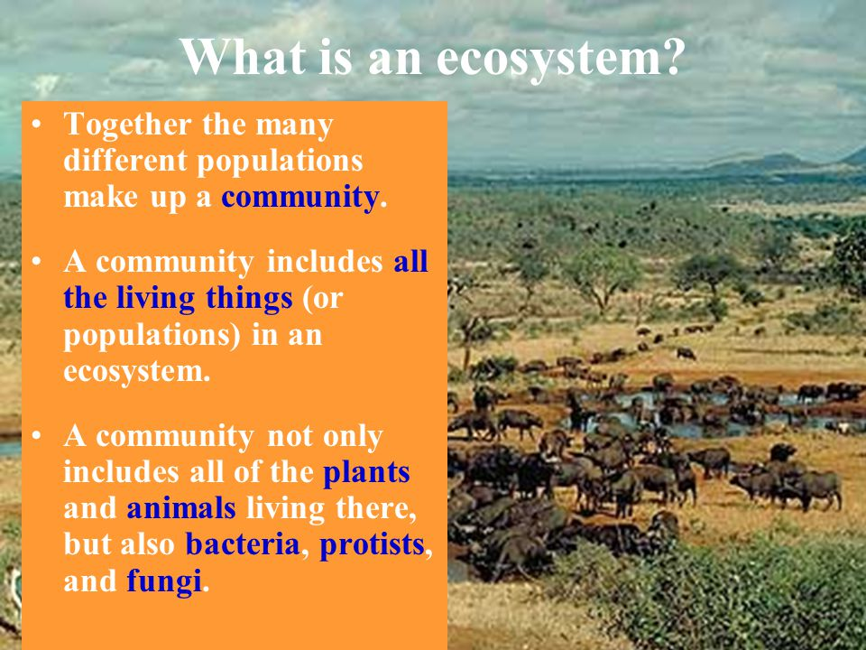 What is an ecosystem Together the many different populations make up a community.