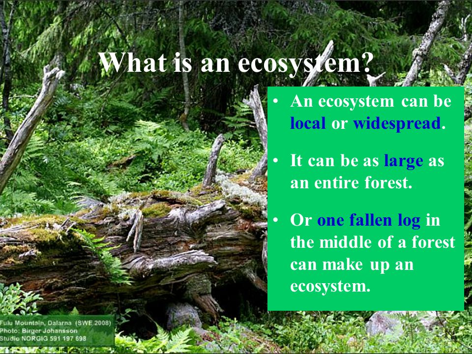 What is an ecosystem An ecosystem can be local or widespread.