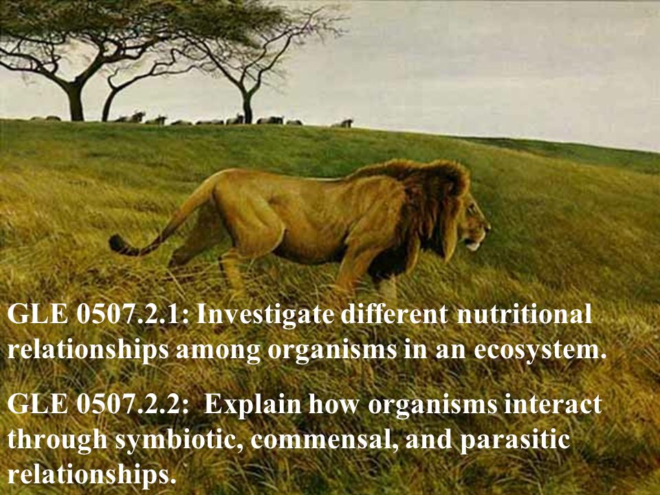 GLE 0507.2.1: Investigate different nutritional relationships among organisms in an ecosystem.