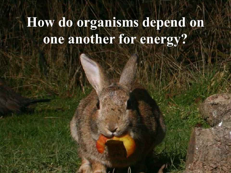 How do organisms depend on one another for energy