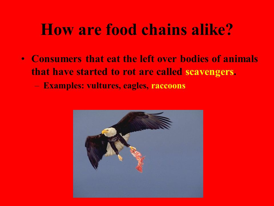 How are food chains alike