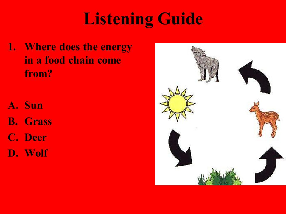 Listening Guide Where does the energy in a food chain come from Sun