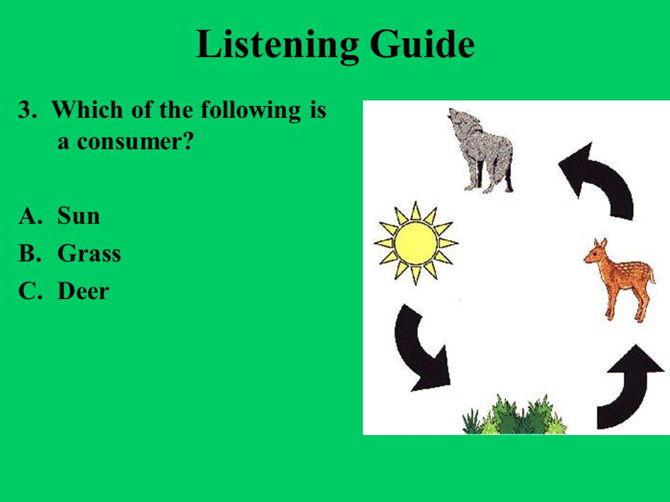 Listening Guide 3. Which of the following is a consumer Sun Grass