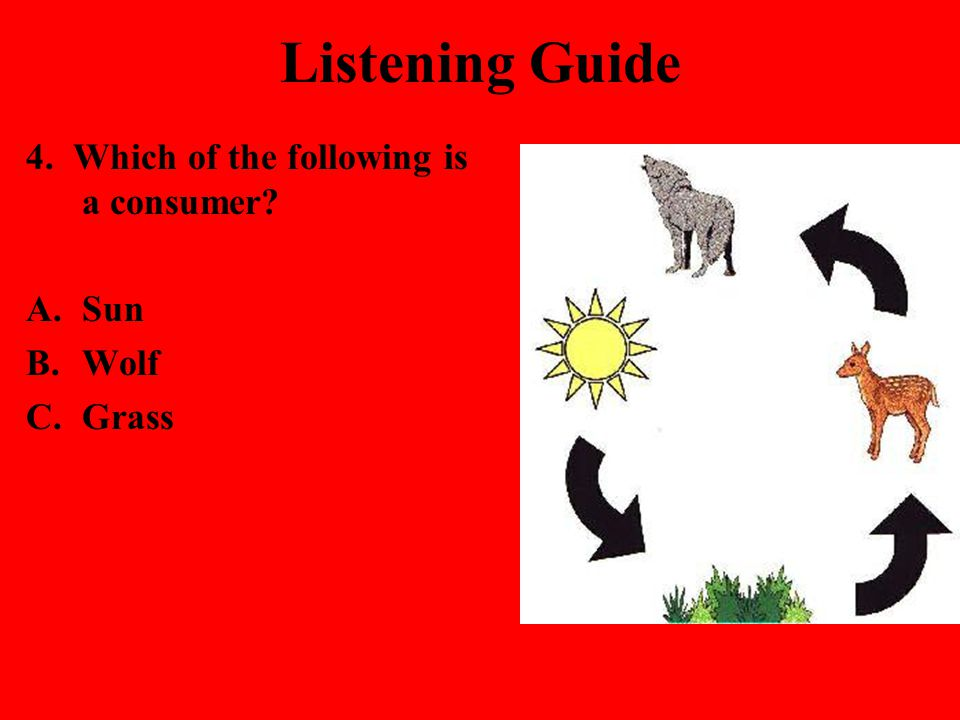 Listening Guide 4. Which of the following is a consumer Sun Wolf