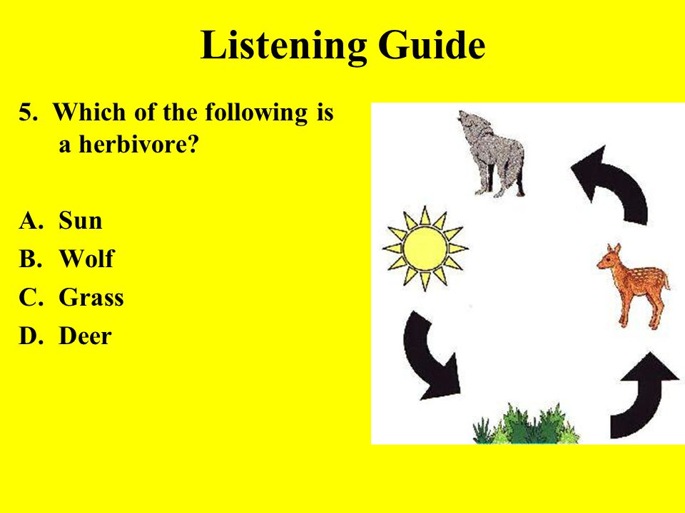 Listening Guide 5. Which of the following is a herbivore Sun Wolf