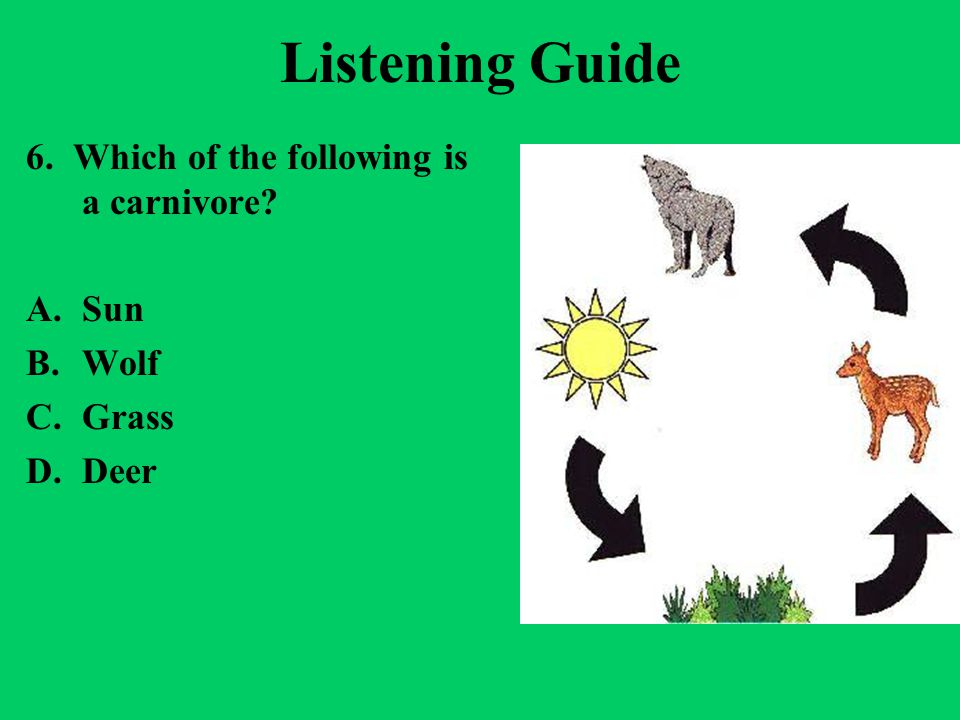 Listening Guide 6. Which of the following is a carnivore Sun Wolf