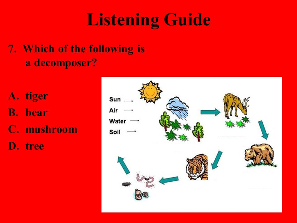 Listening Guide 7. Which of the following is a decomposer tiger bear