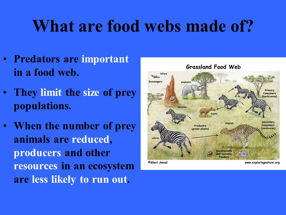 What are food webs made of