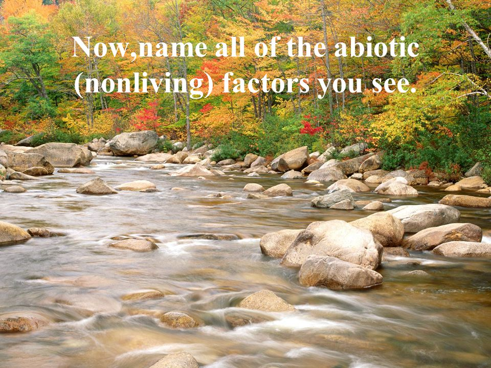 Now,name all of the abiotic (nonliving) factors you see.