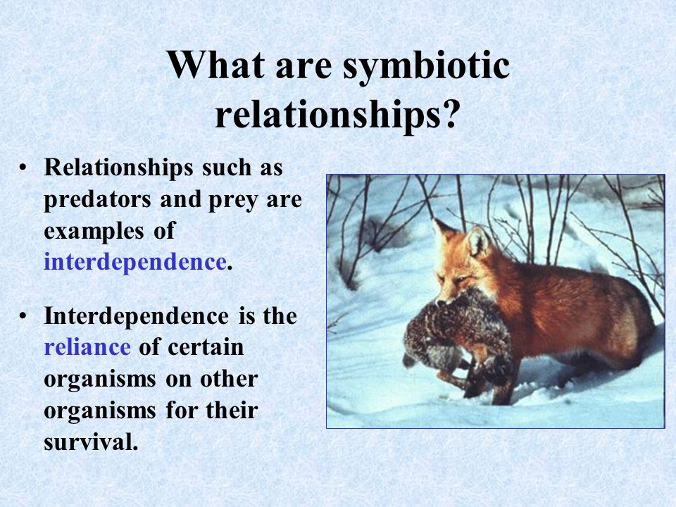 What are symbiotic relationships