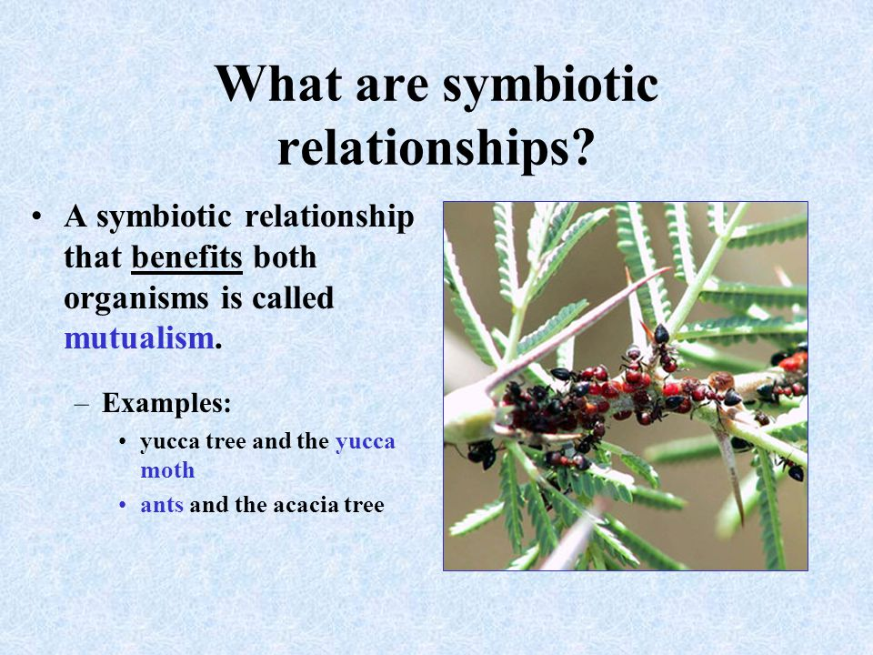 what is a symbiotic relationship in which both organisms benefit