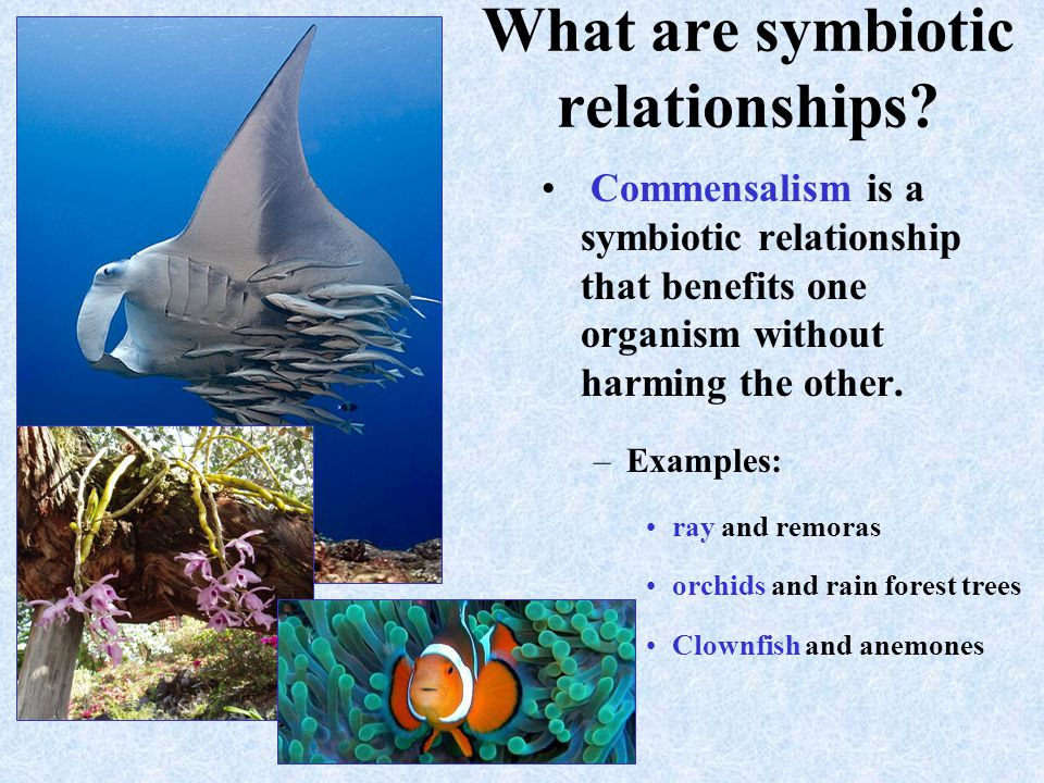 what is the symbiotic relationship