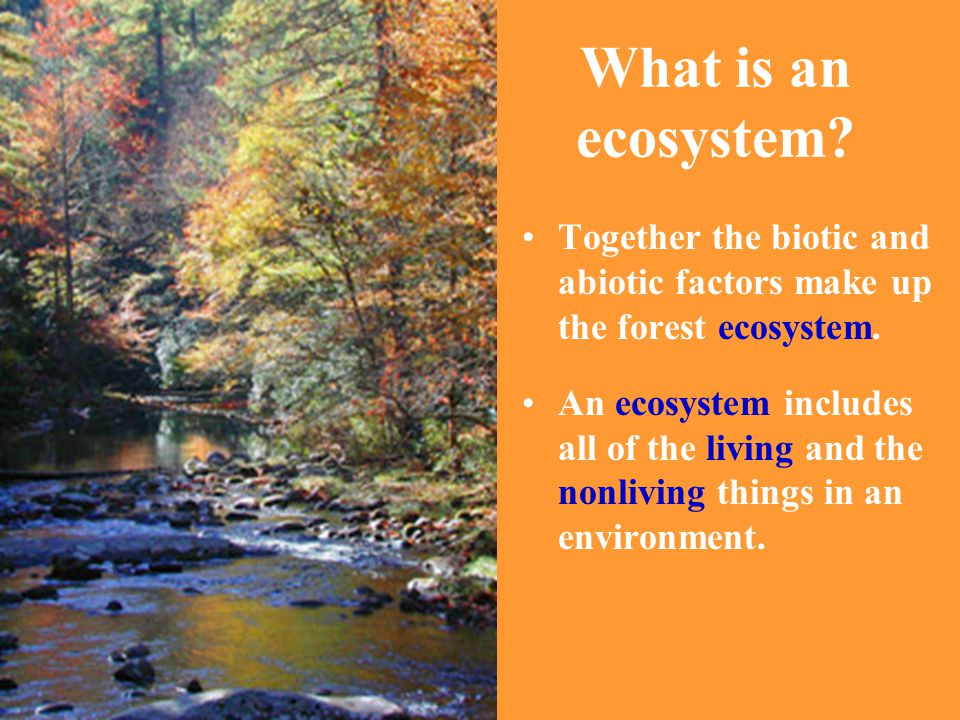 What is an ecosystem Together the biotic and abiotic factors make up the forest ecosystem.