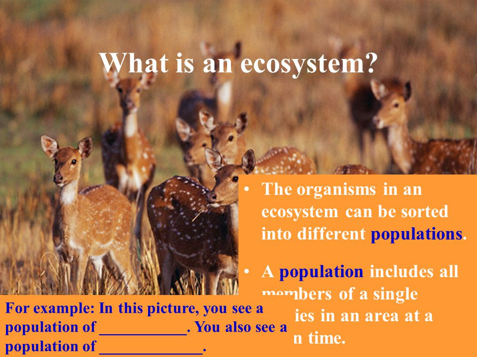 What is an ecosystem The organisms in an ecosystem can be sorted into different populations.