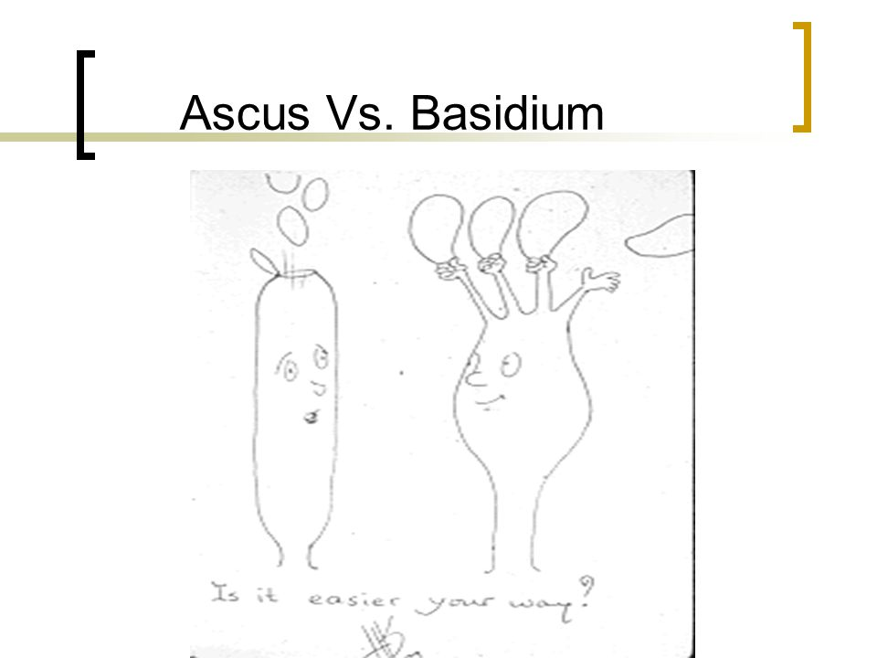 Ascus Vs. Basidium