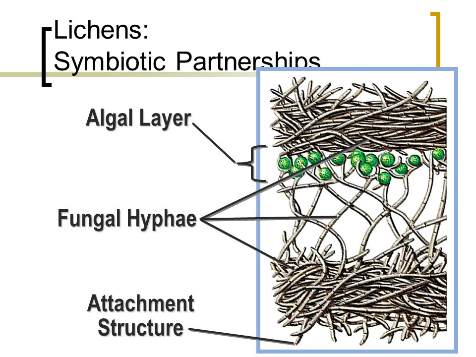 Lichens: Symbiotic Partnerships