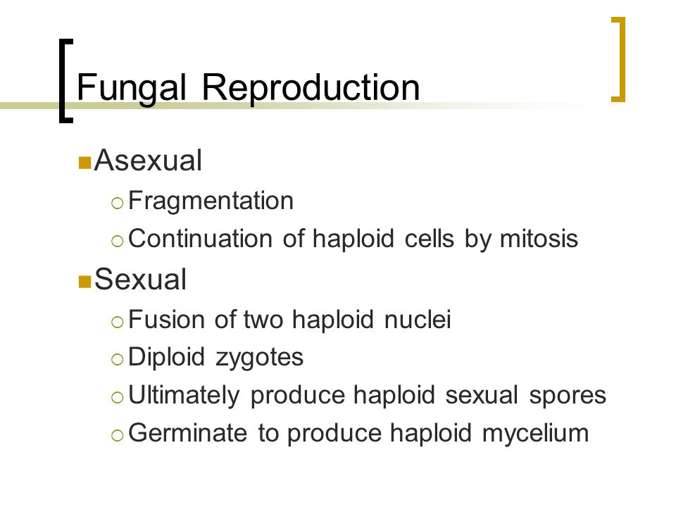 Fungal Reproduction Asexual Sexual Fragmentation