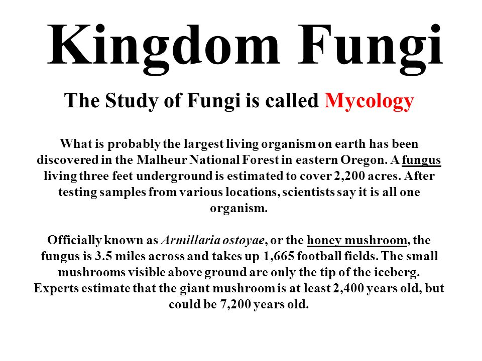 The Study of Fungi is called Mycology