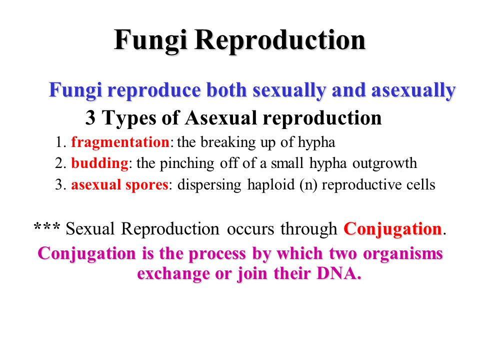 *** Sexual Reproduction occurs through Conjugation.
