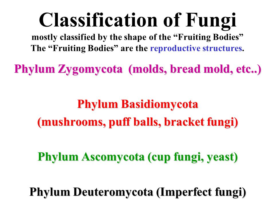 Classification of Fungi mostly classified by the shape of the Fruiting Bodies The Fruiting Bodies are the reproductive structures.