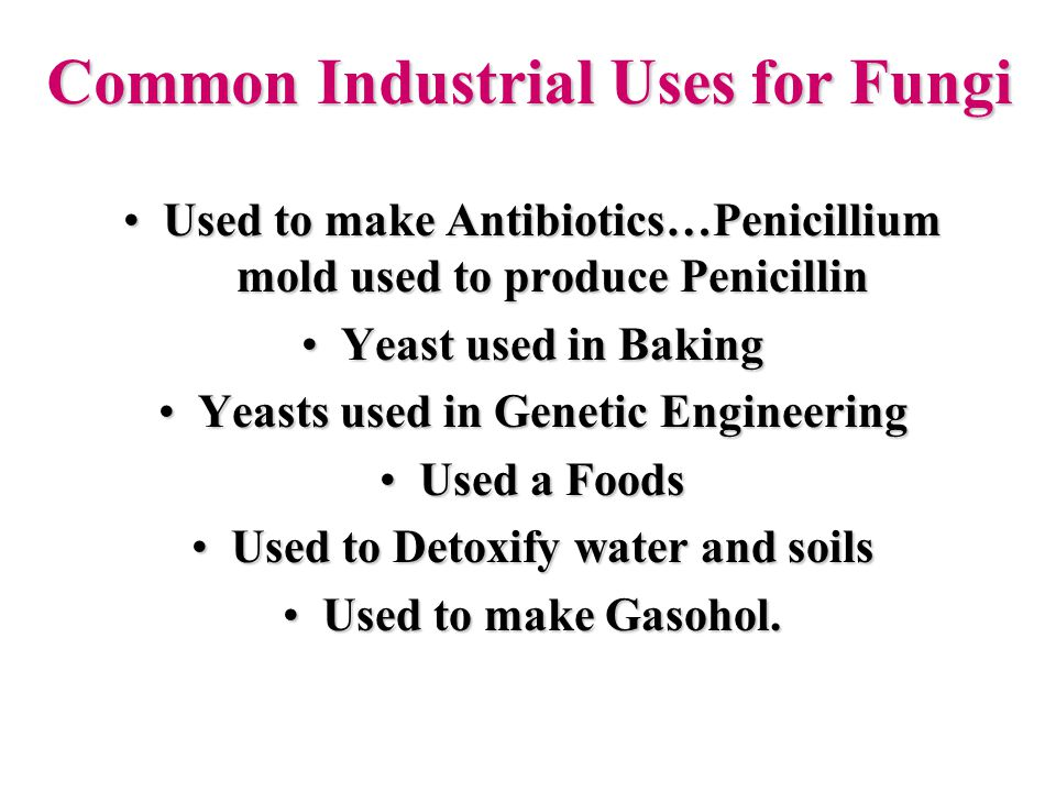 Common Industrial Uses for Fungi