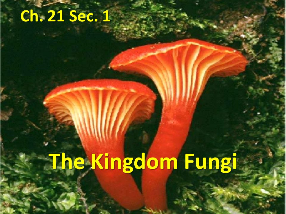 Ch. 21 Sec. 1 The Kingdom Fungi
