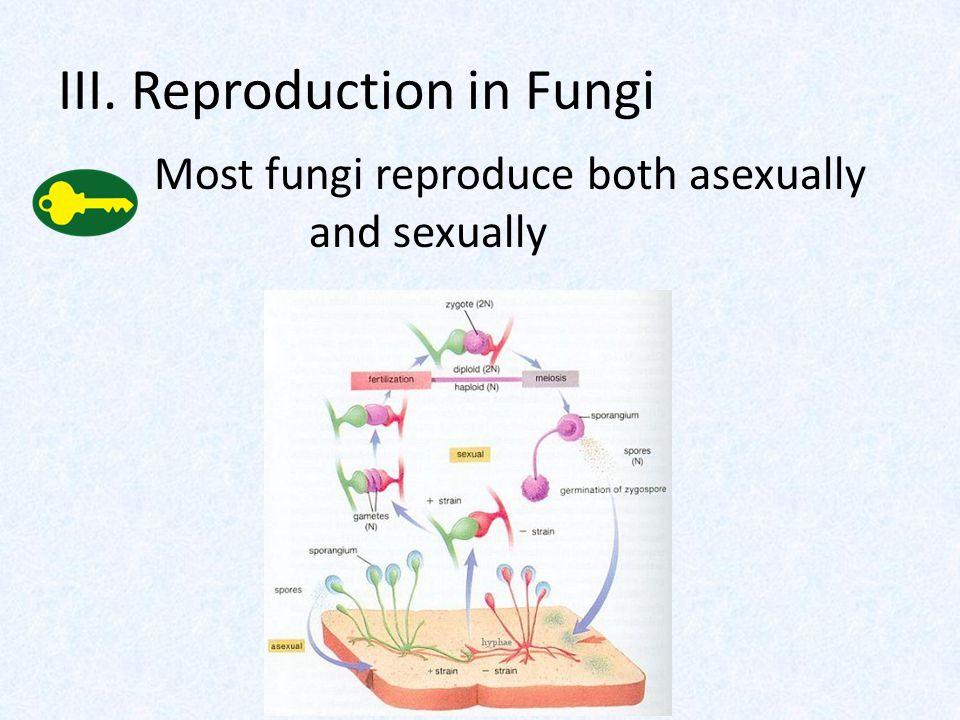 III. Reproduction in Fungi