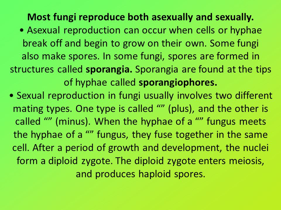 Most fungi reproduce both asexually and sexually