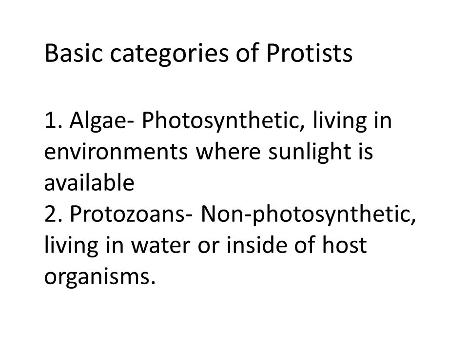 Basic categories of Protists 1