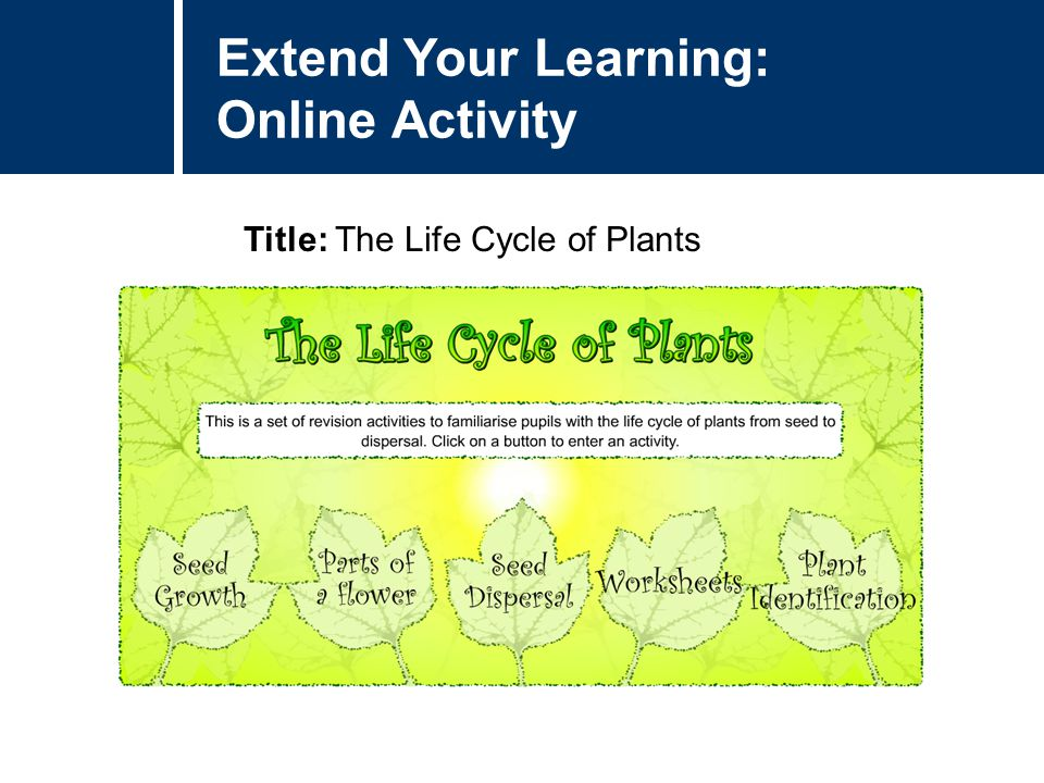 Extend Your Learning: Online Activity