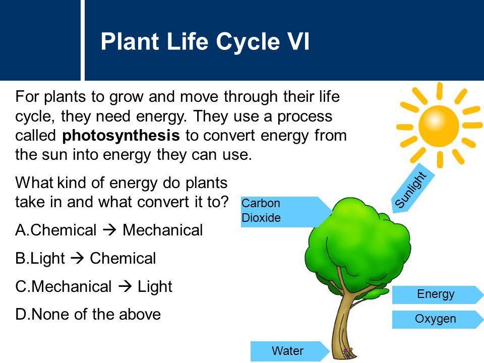 Plant Life Cycle VI