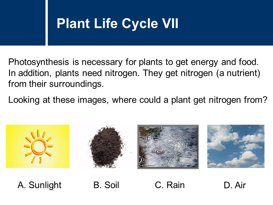 Plant Life Cycle VII