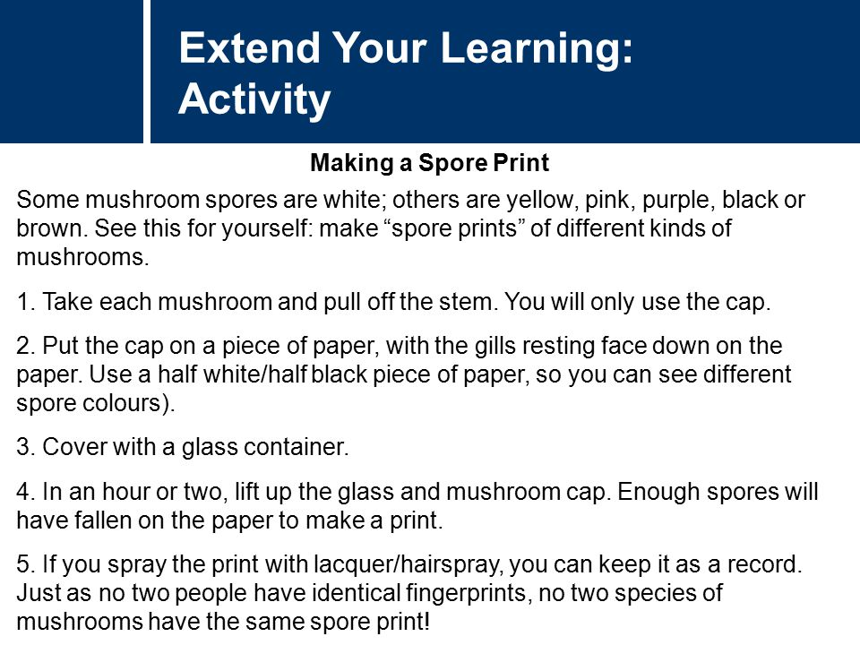 Extend Your Learning: Activity