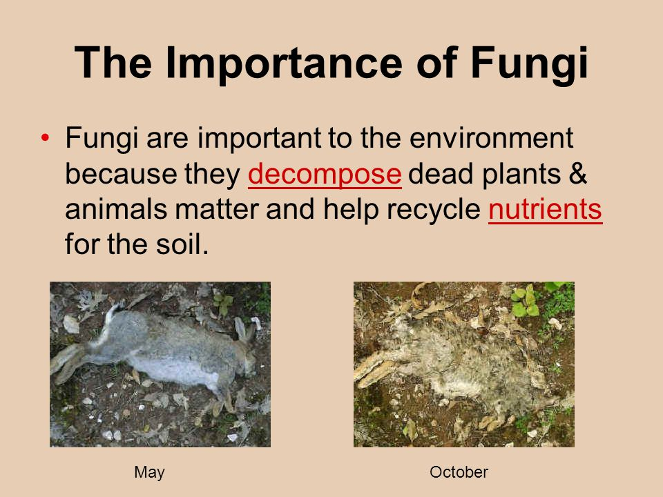 The Importance of Fungi