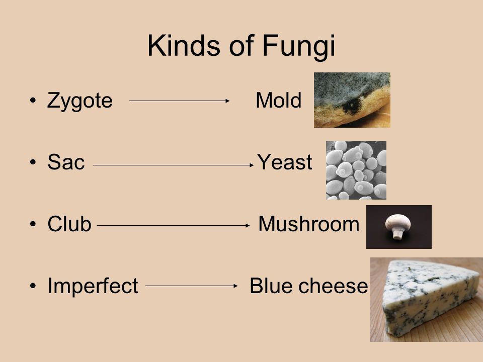 Kinds of Fungi Zygote Mold Sac Yeast Club Mushroom