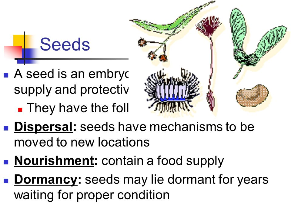 Seeds A seed is an embryo surrounded by a food supply and protective coat. They have the following adaptations.