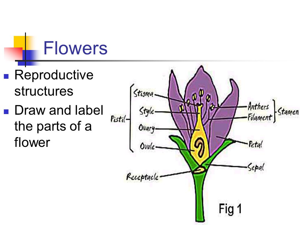 Flowers Reproductive structures Draw and label the parts of a flower