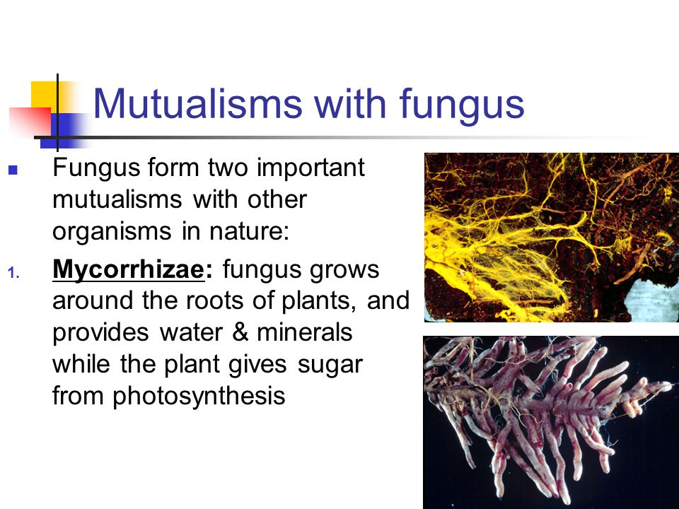 Mutualisms with fungus