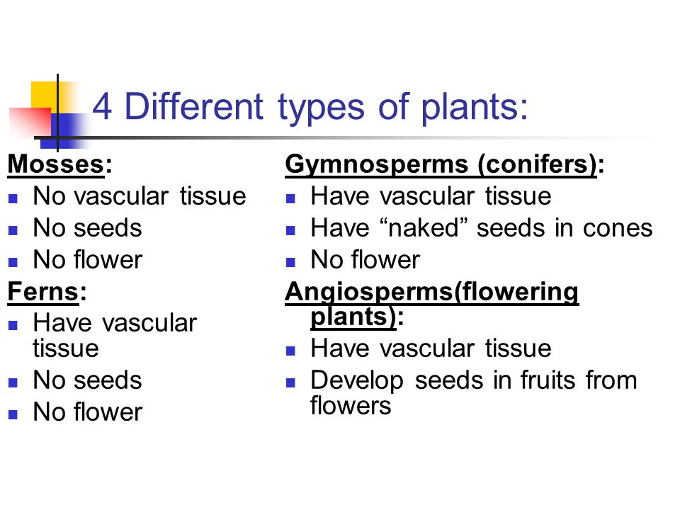 4 Different types of plants: