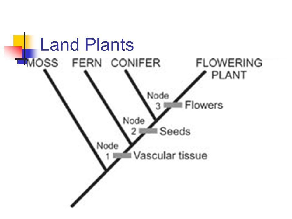Land Plants
