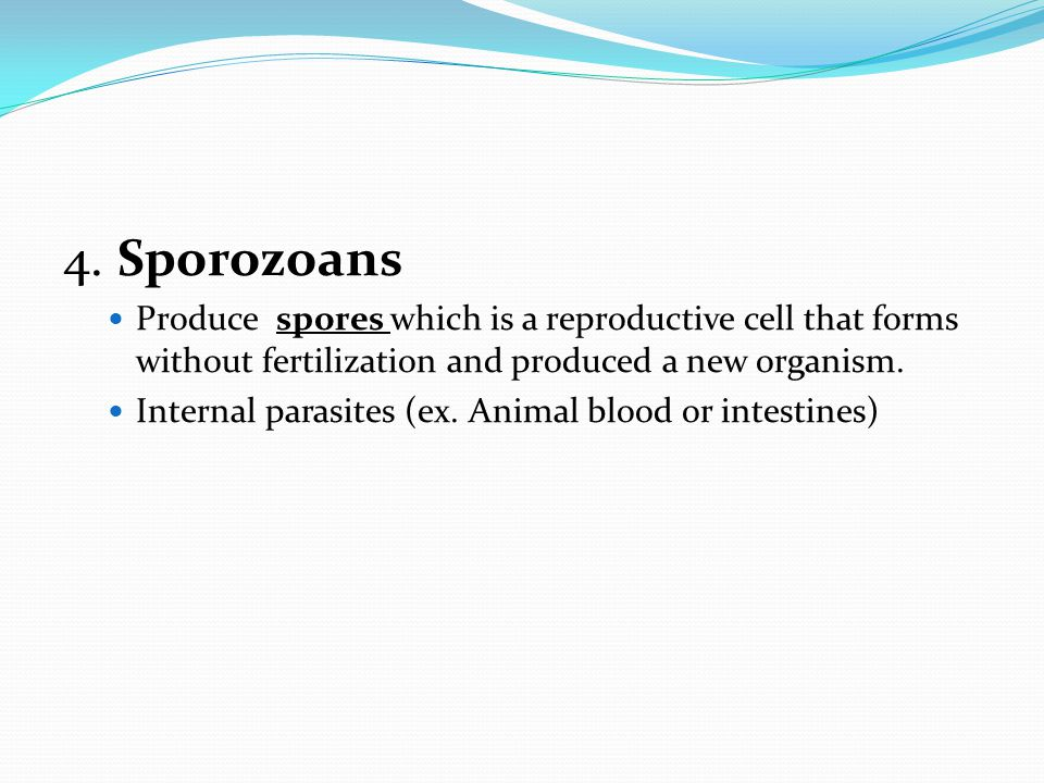 4. Sporozoans Produce spores which is a reproductive cell that forms without fertilization and produced a new organism.