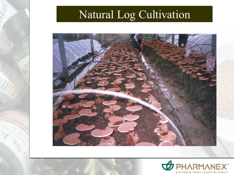 Natural Log Cultivation